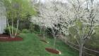 12-Redbud planting in full glory (1)