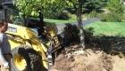 3-transplanting spruce tree (3)