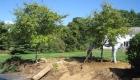6-transplanting spruce tree (6)