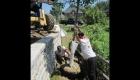 7-Large tree planting (1)