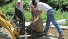 8-Large tree planting (2)