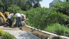 9-Large tree planting (3)